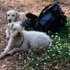 Daisy och Phoebe